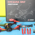 Cicada_180